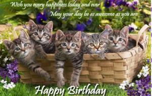 happy birthday mom cat happy birthday to ml from the