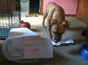 20 Bad Dogs Being Shamed With Signs