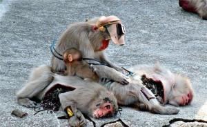 Monkey repair