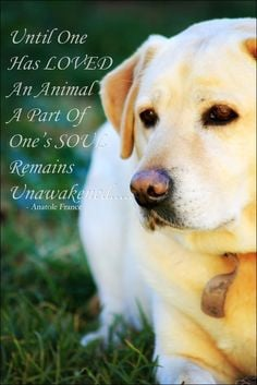 Labrador Quotes