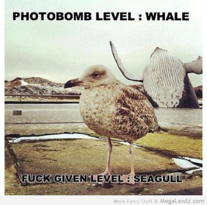 funny-whale-seagull-pictures