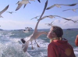 funny seagulls moment funny seagulls moment