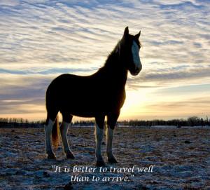 Horses r so beautiful