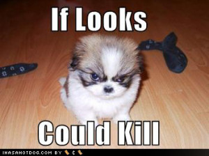 ... dog costume jpg big nose dog jpg funny dog pictures angry look dog jpg