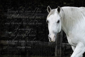 Beautiful Horse Quote
