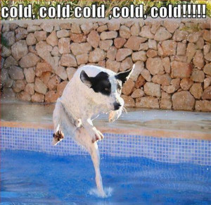 Cold Cold - Return to Funny Animal Pictures Home Page