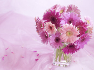 Beautiful Flower Background 7801 Hd Wallpapers