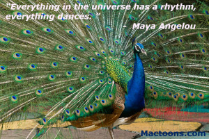 Powerful Music Quotes: Male Peacock Dancing