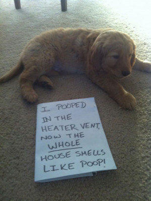 Funny dog shaming (22)