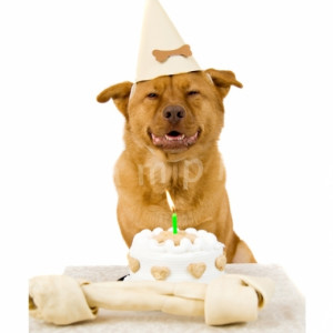 funny animal birthday pictures funny animal birthday pictures funny ...