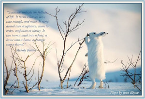 Gratitude ~ a quote from Melody Beattie #quotes #Melody_Beattie