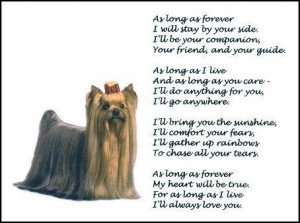 Details about New! YORKSHIRE TERRIER print