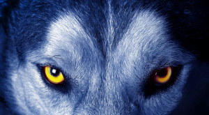 Urban Legends, #Werewolf and #Lycan