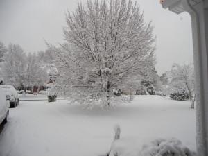 ... are all the Christmas Blizzard 2010 Snow Pics?-snow-yard-12.26.10.jpg