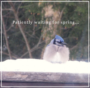 Waiting for Spring Quotes