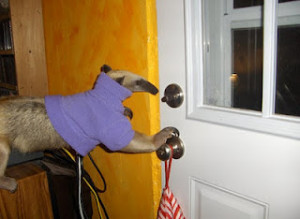 Funny anteaters, funny anteaters pictures, anteater facts