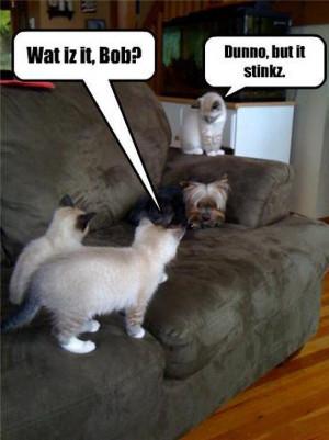 Animal Humor cat & dog funny