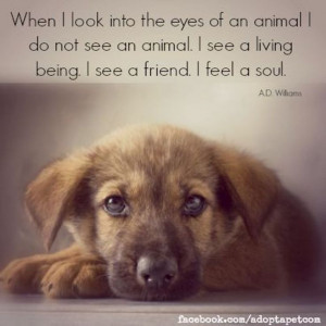 Inspiring Quotes about Animals. Visit Canine Support Teams to see how ...