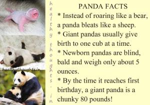 Panda Bear Quotes. QuotesGram  Panda Bear Quot...