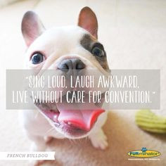 French Bulldog Motto: Sing loud, lough awkward, live without care for ...