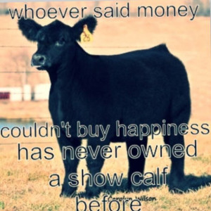 , Cattle Show, Show Steering Quotes, So True, Show Livestock Quotes ...