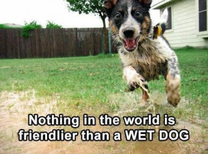 Funny Quotes About Dog Owners #1