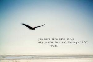 bird, life, quote, sky