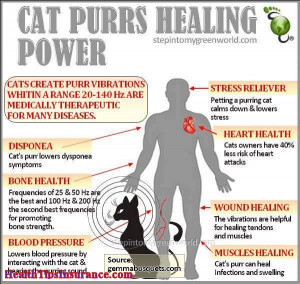 Cat Purrs Healing Power