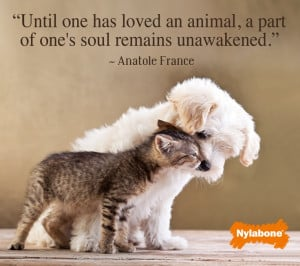 Pets bring unconditional love!