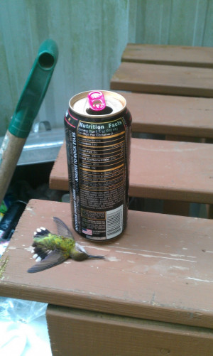 Don't drink Energy drinks... they are dangerous. This hummingbird ...