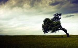 bending-tree.jpg