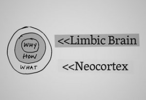Limbic-Brain-Simon-SinekM.jpg