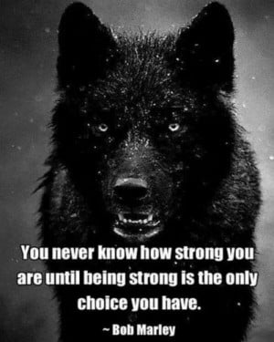 lone wolf quotes life