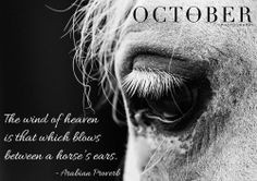 For the love of the horse! #horse #arabian #arab #arabicproverb # ...