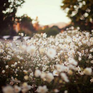 flowers, tumblr