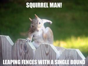 Funny Squirrel (72)