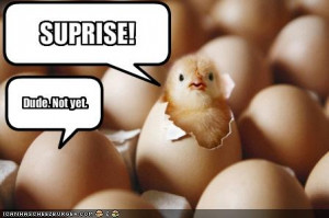 funny chick funny chick suprise animal pictures pics and animal ...