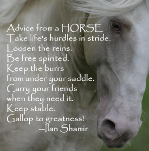 ... Quotes. Pictures.Downlode Horse Pictures With Quotes in your computer