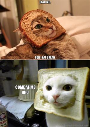 Bread Cat - Come At Me Bro