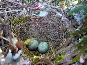 Bird Lay Egg Nest Hatch And