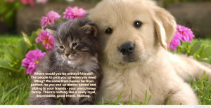 tag archives friendship quote nice nice friendship quote with animals