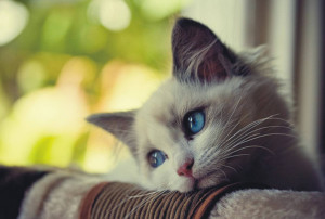 Lonely Cat - Cats Picture