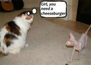 What does the fat cat say to the skinny cat