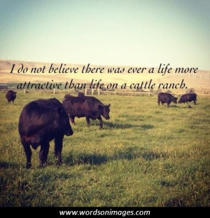 Cow Quotes and Sayings