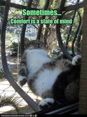Cat's perspective