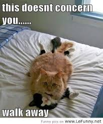 funniest cat quote, funny cat quote