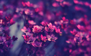 Violet Purple Flowers Wallpaper