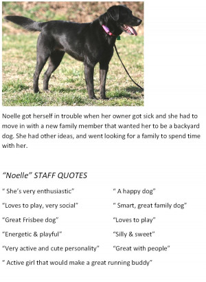 Shelter Quotes Picfly...