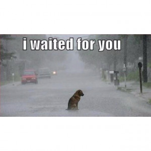 Sad dogAnimal Right, Sadness Dogs, Dogs 3, Humor Photos, Animal Quotes ...