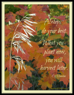 Autumn Quote with Shaft of Wheat Photo from RainbowsWithinReach